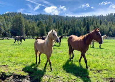 Horses 6-19